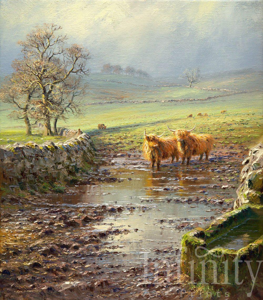 Highland Cattle, Peak District