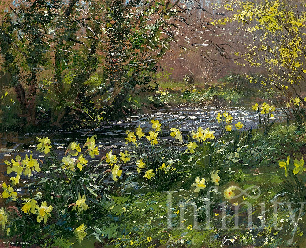 Daffodils and Forsythia, River Lathkill - Mark Preston